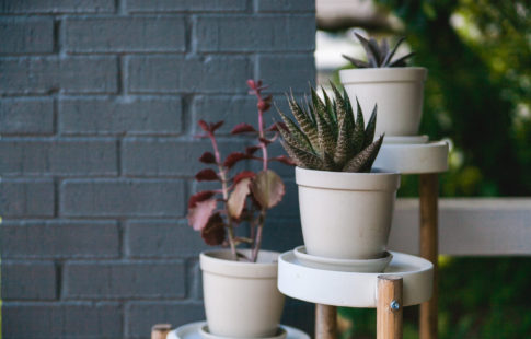 How to keep outdoor plants alive all summer