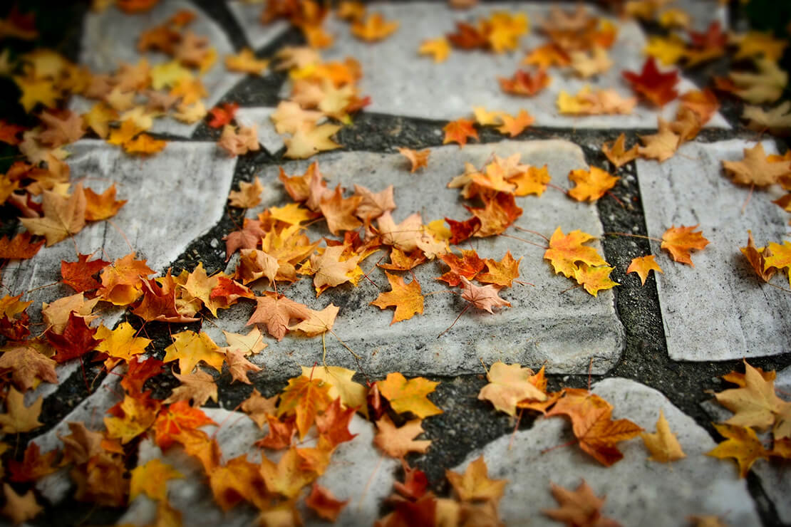 Lawn care tips for fall