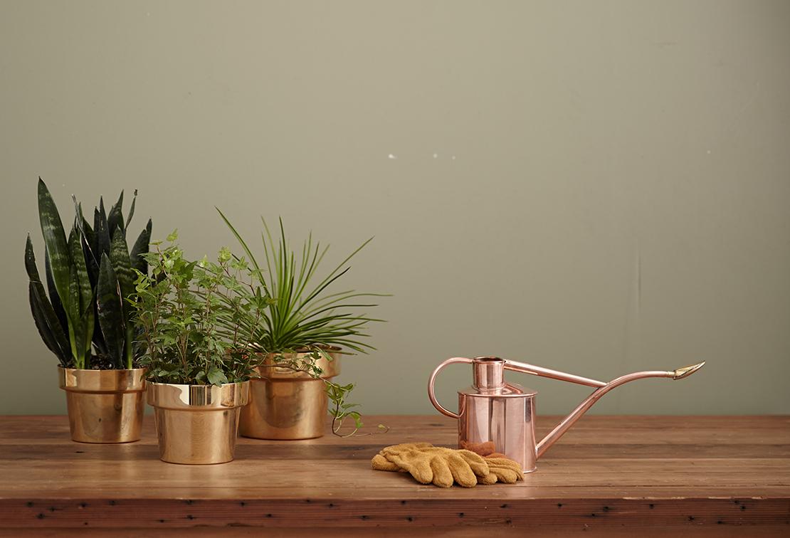 houseplants have millennials spending