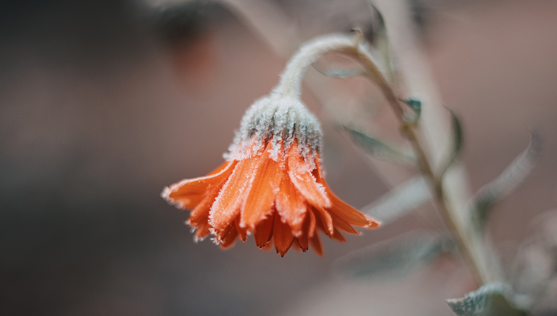 Outdoor Plants that Thrive During Winter