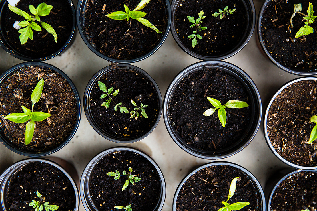 Sustainable Living Tips To Use At Home