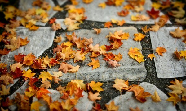 Fall Lawn Care Tips To Tackle This Season