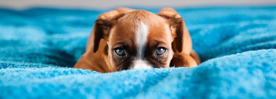 Create The Purr-fect Pet Friendly Home