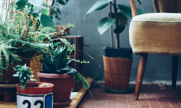 Hardy Indoor Plants For the Forgetful Gardener