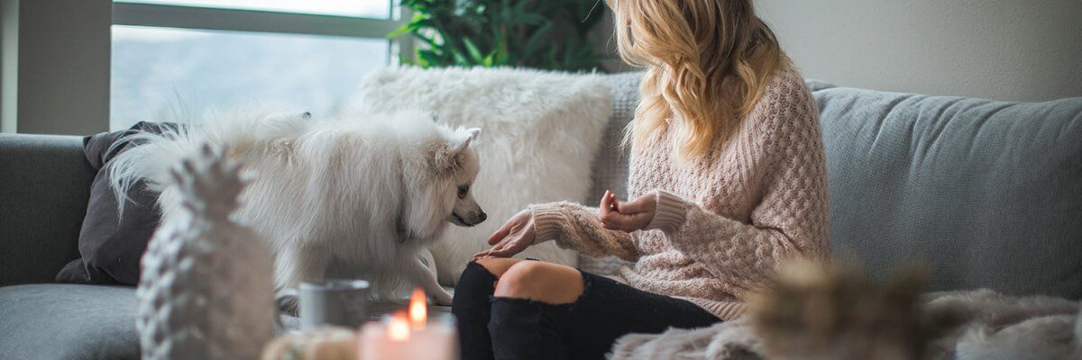 4 Pet Tips For Creating A Stylish & Pet-Friendly Home